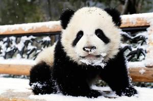 SEO in 2013 Panda