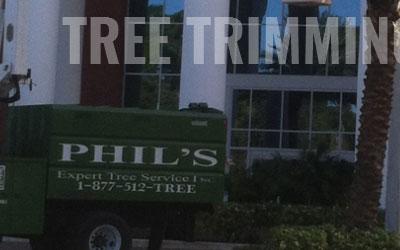 Phils Tree